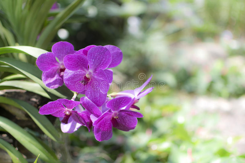 Download Orchid stock image. Image of garden, conservation, ecosystem - 39161093