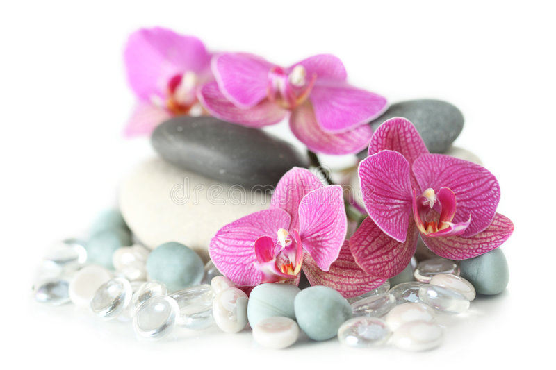 Orchid laying on stones stock photo