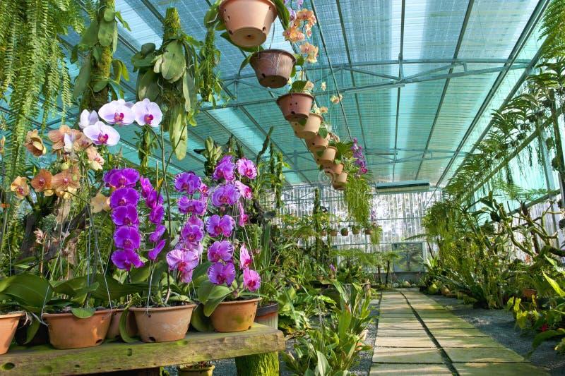 Orchid Park Kuching immagini stock libere da diritti
