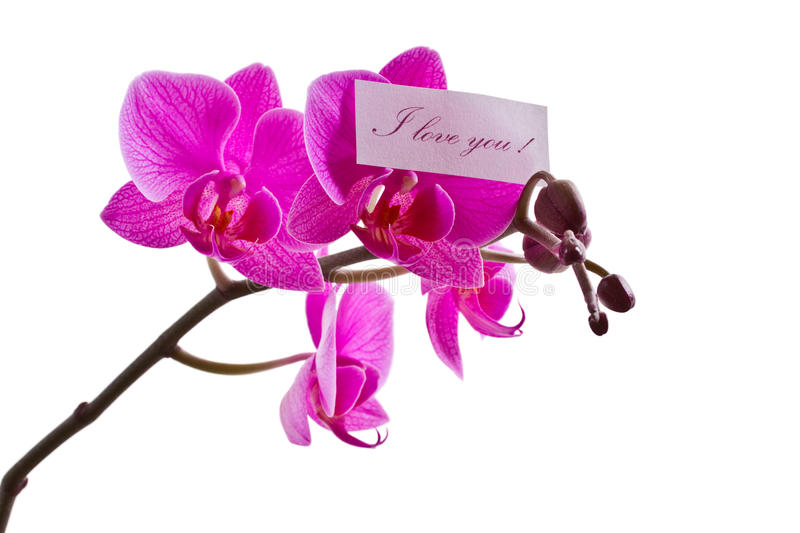 Orchid Pink Royalty Free Stock Images