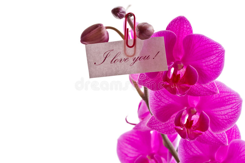 Download Orchid pink stock photo. Image of flora, nature, blossom - 28540500