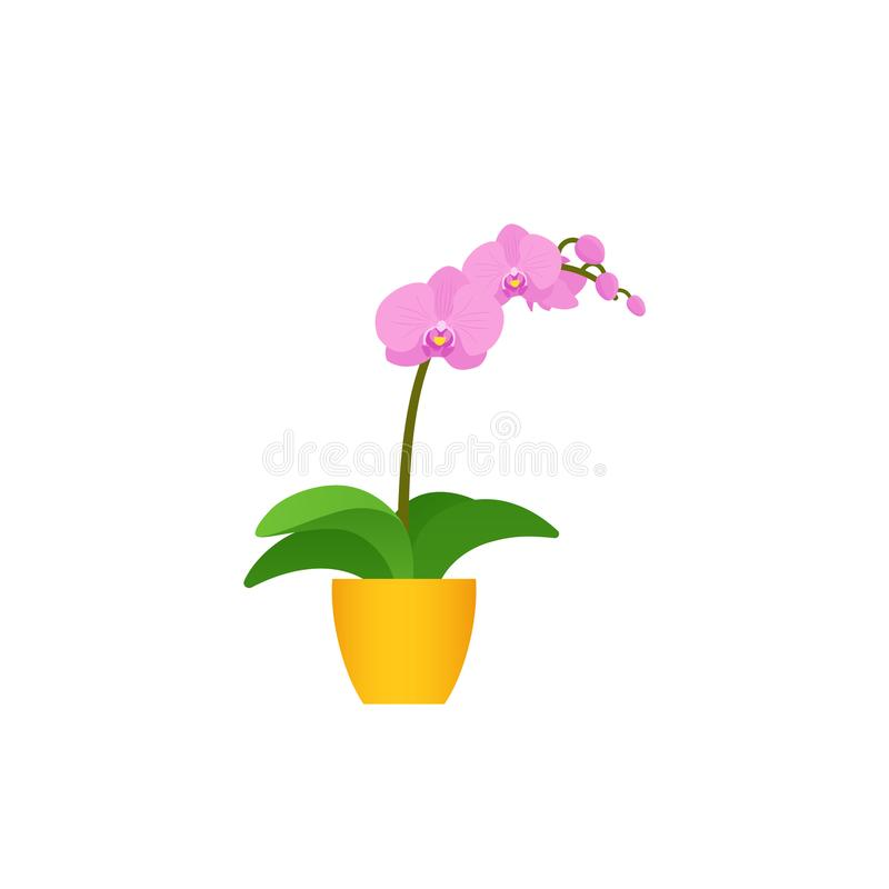 Orchid potted flower plant in flat design. Vector illustration. Orchid potted plant in pot. Vector. Indoor flower in flat design isolated on white background royalty free illustration