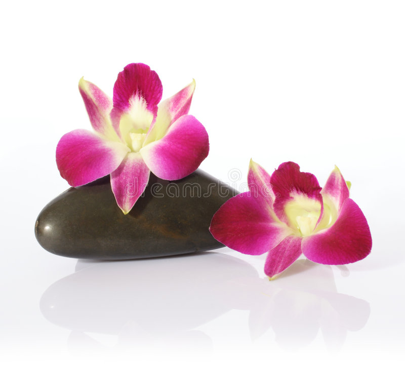 Download Orchid And River Stones Royalty Free Stock Photos - Image: 1258498