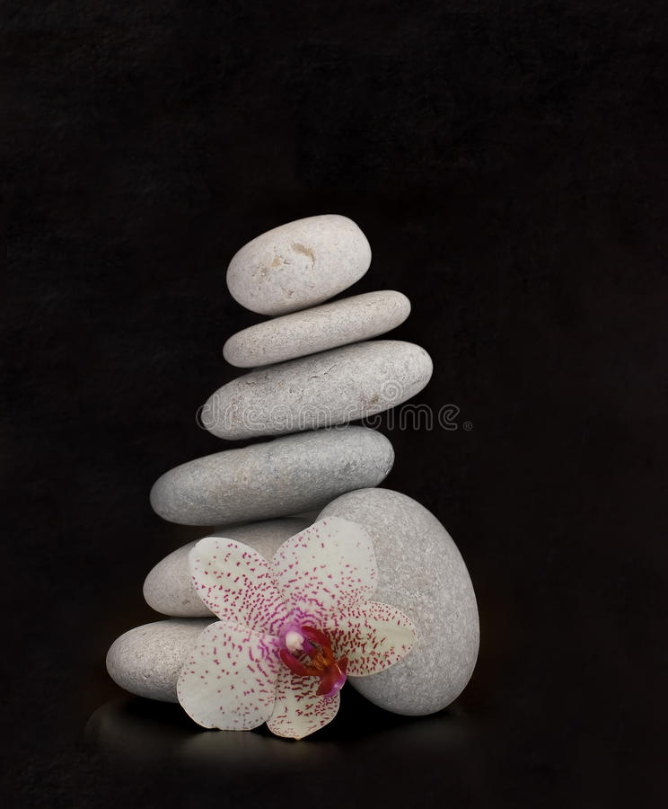 Orchid on rocks. Orchid flower and natural sea stones stock images