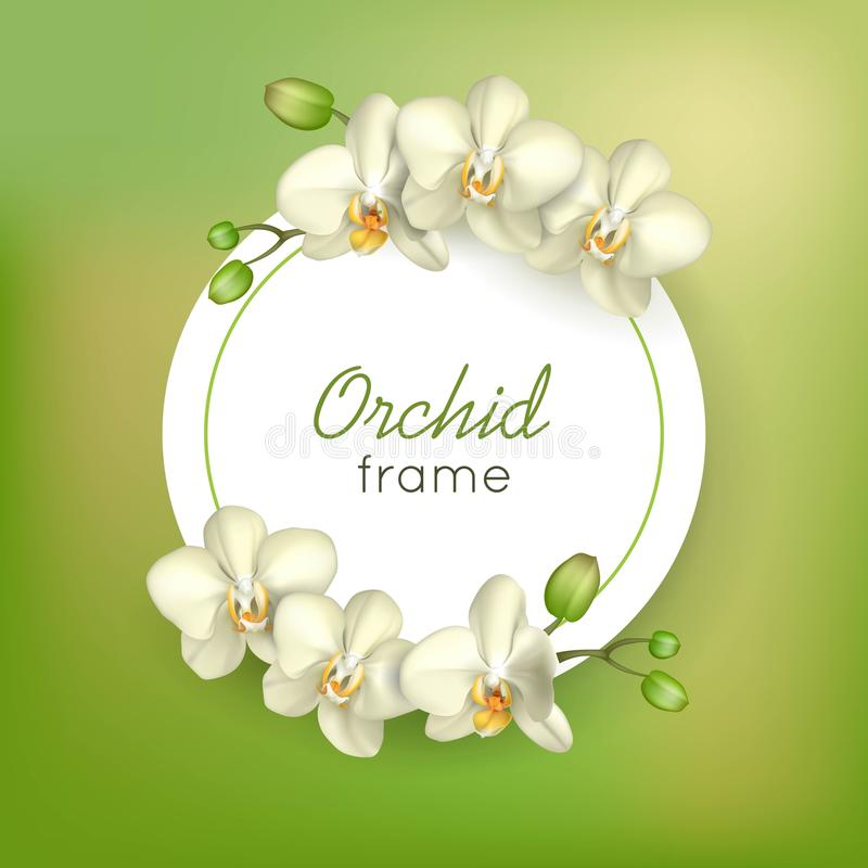 Orchid round frame green background vector illustration