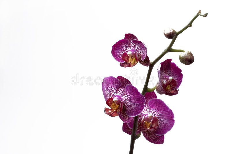 orchid scenery spa στοκ φωτογραφία με δικαίωμα ελεύθερης χρήσης