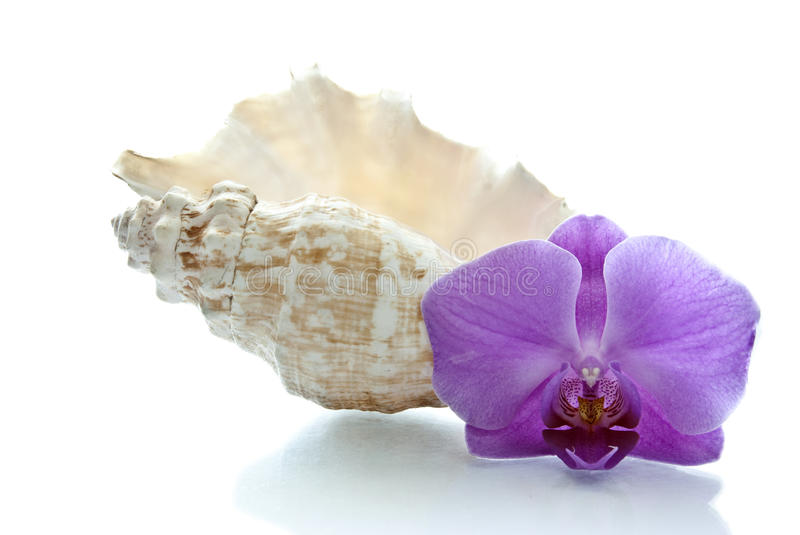 Orchid and shell royalty free stock photos