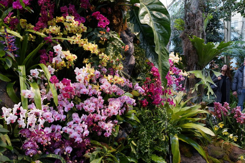The 2016 Orchid Show 50. More thrilling than ever, the 14th annual Orchid Show transports visitors on a journey through orchid collecting history, each moment royalty free stock photos