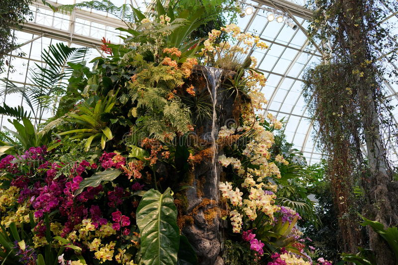 The 2016 Orchid Show 58. More thrilling than ever, the 14th annual Orchid Show transports visitors on a journey through orchid collecting history, each moment stock photos