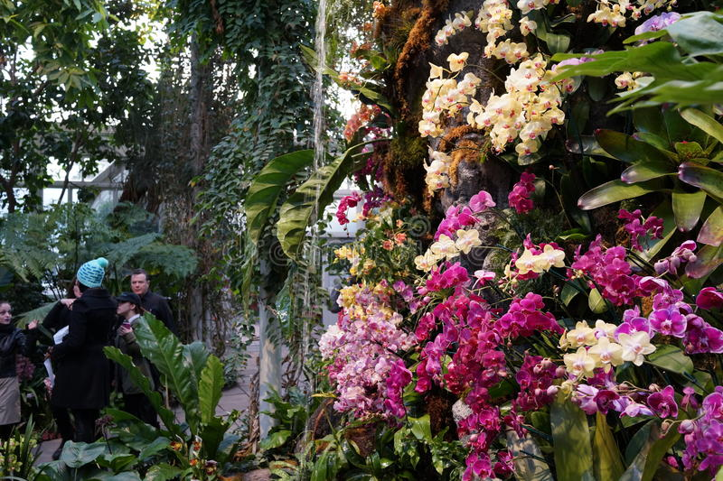 The 2016 Orchid Show 74. More thrilling than ever, the 14th annual Orchid Show transports visitors on a journey through orchid collecting history, each moment royalty free stock images