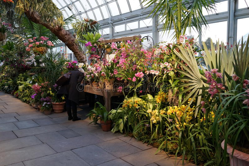 The 2016 Orchid Show 98. More thrilling than ever, the 14th annual Orchid Show transports visitors on a journey through orchid collecting history, each moment stock photos