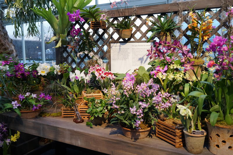 The 2016 Orchid Show Part 2 6. More thrilling than ever, the 14th annual Orchid Show transports visitors on a journey through orchid collecting history, each royalty free stock photo