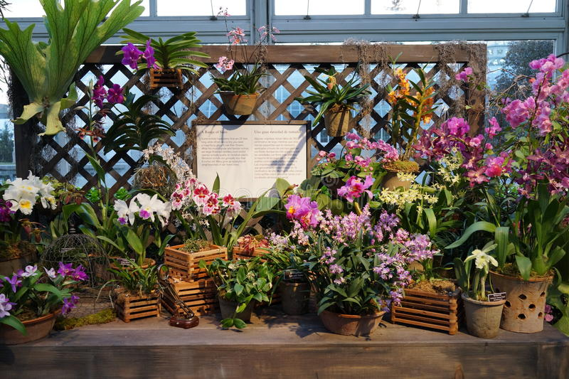 The 2016 Orchid Show Part 2 10. More thrilling than ever, the 14th annual Orchid Show transports visitors on a journey through orchid collecting history, each royalty free stock image