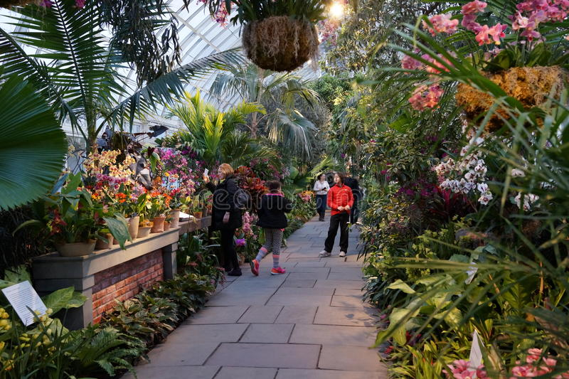 The 2016 Orchid Show Part 2 15. More thrilling than ever, the 14th annual Orchid Show transports visitors on a journey through orchid collecting history, each royalty free stock photo