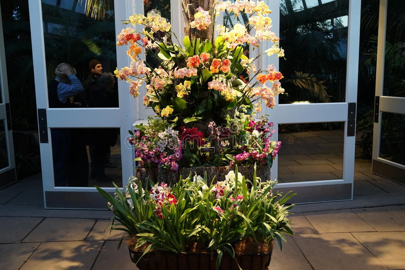 The 2016 Orchid Show Part 2 42. More thrilling than ever, the 14th annual Orchid Show transports visitors on a journey through orchid collecting history, each royalty free stock image