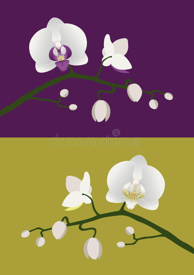 Download Orchid stem stock vector. Image of background, petal - 36787850