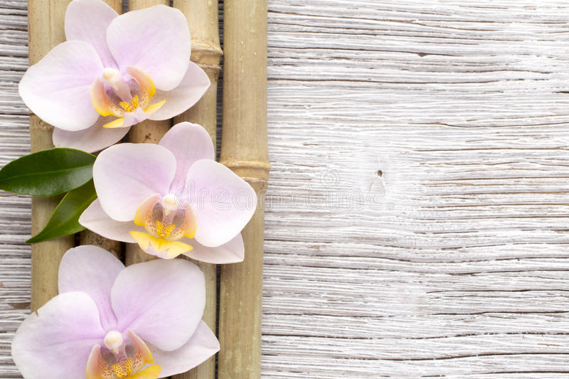 Orchid. Orchid on a stone surface. Studio photography stock photo