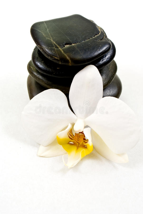 Orchid and stones stock image