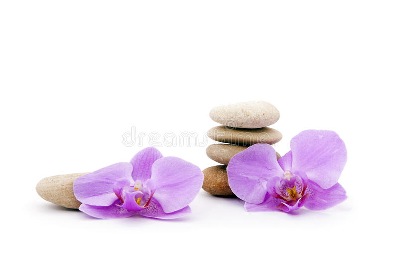 Orchid and the stones themselves. stock photography