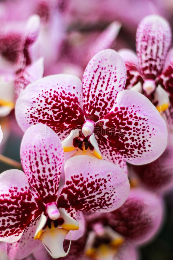 Orchid in Thailand stock images