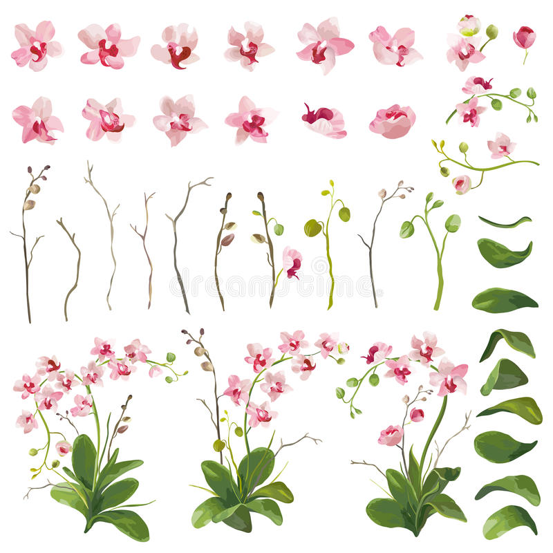 Orchid Tropical Flowers Floral Elements in Watercolor Style vector illustration