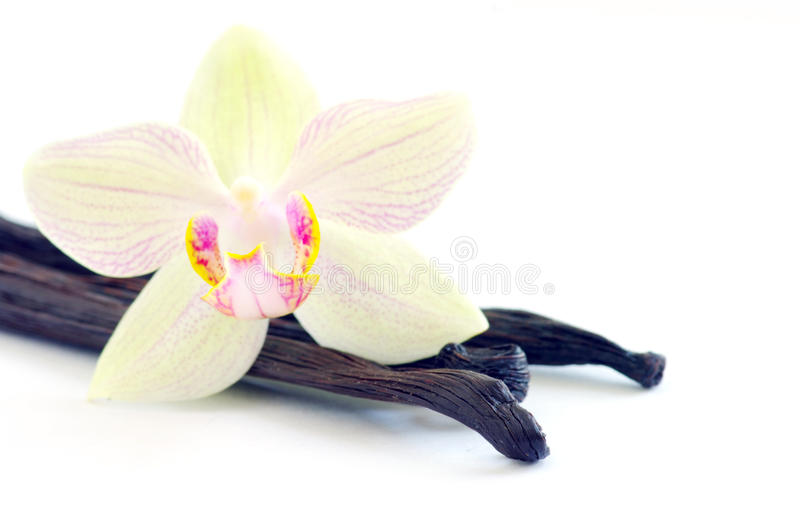 Orchid with vanilla beans royalty free stock image