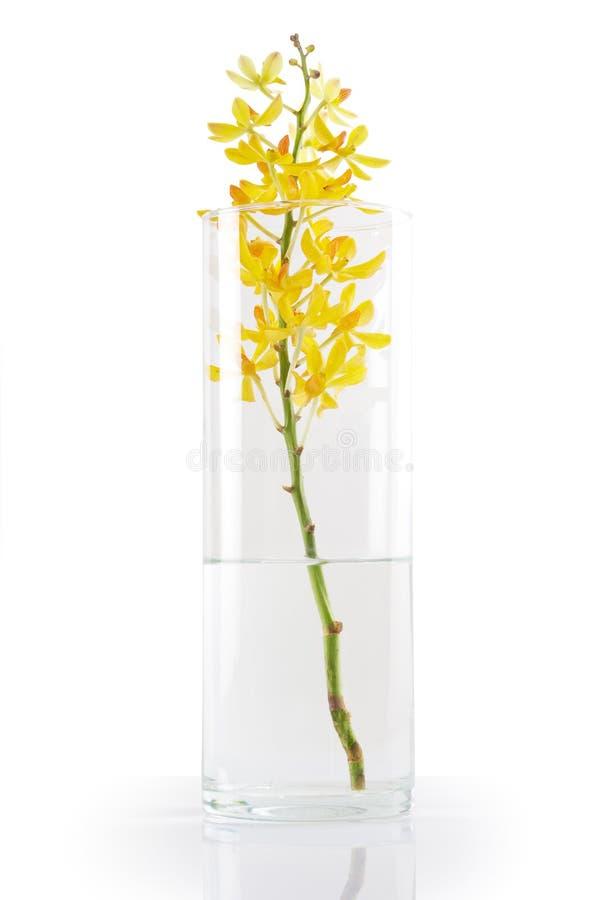 orchid vase κίτρινο στοκ φωτογραφία με δικαίωμα ελεύθερης χρήσης
