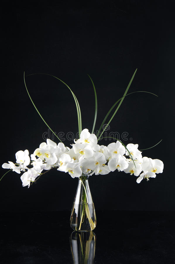 Orchid in vase stock photography