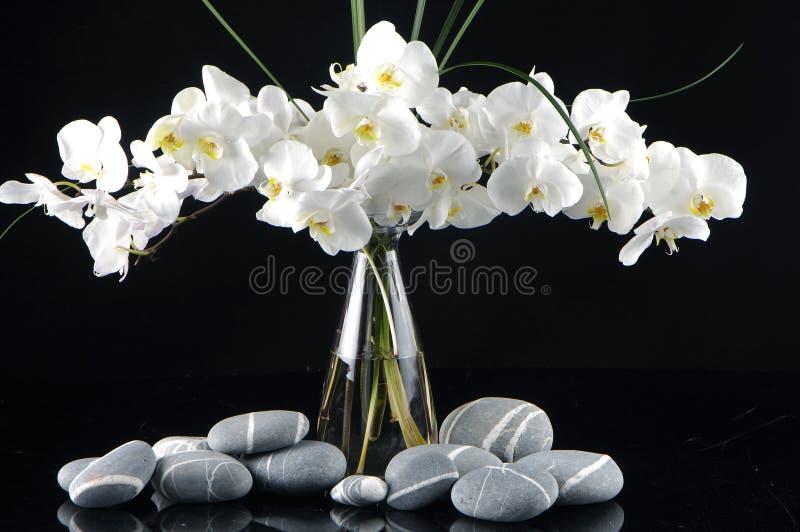 Download Orchid in vase stock image. Image of summer, floral, vase - 15221487