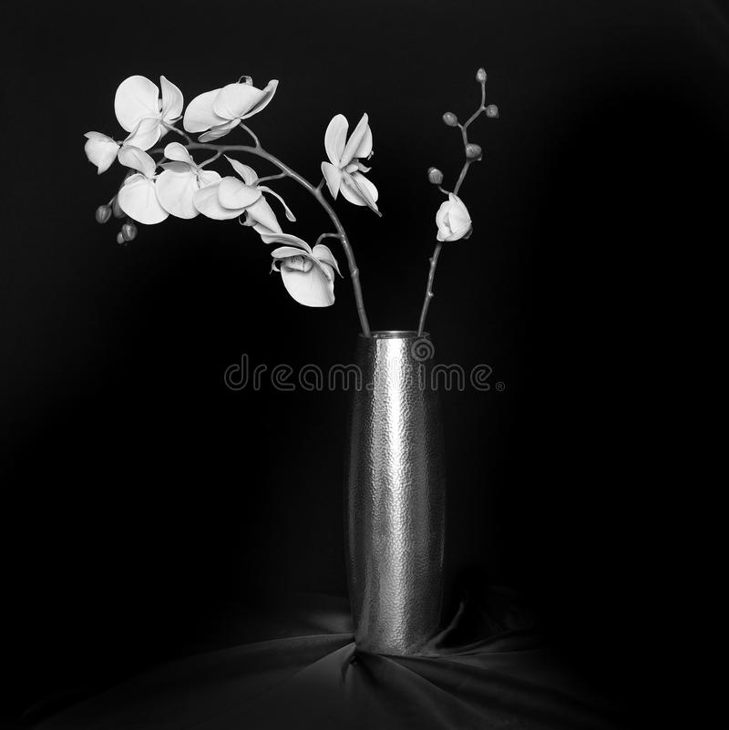 Download Orchid in a a vase stock image. Image of still, blooming - 26280901