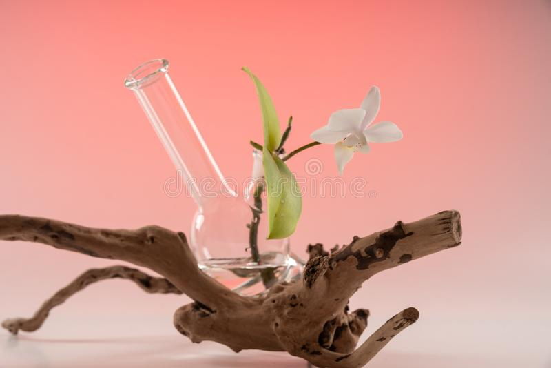 Orchid in the vessel of Smoking accessories Bong 2. royalty free stock images