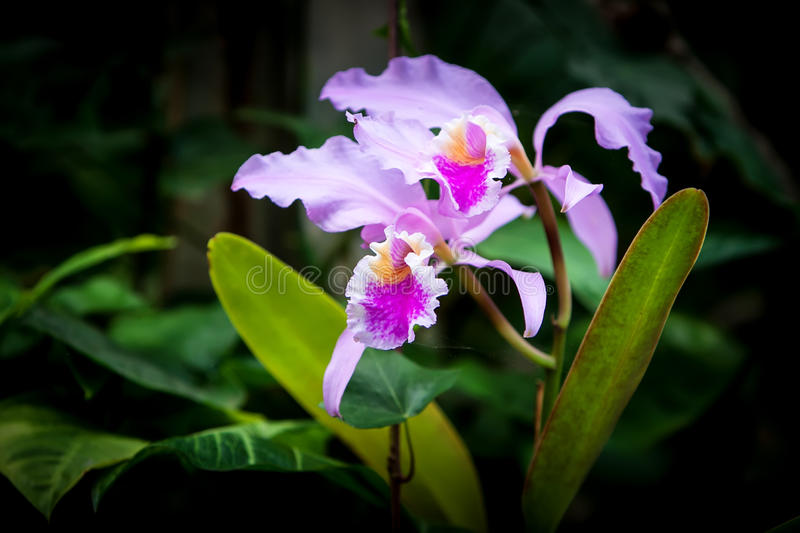 Download Orchid stock image. Image of outdoors, botany, flora - 30424957