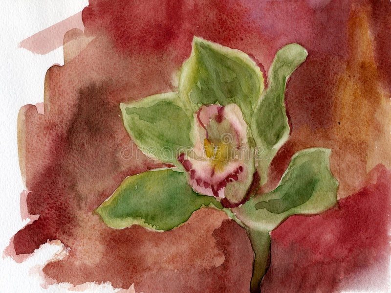 Download Orchid. Watercolor. stock illustration. Illustration of picture - 6425754