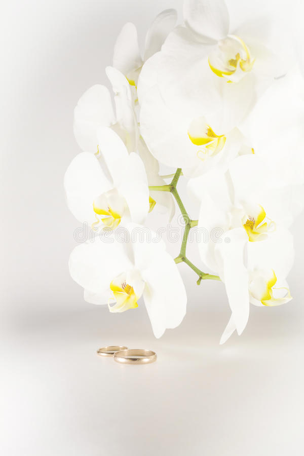Orchid and wedding rings. On white background royalty free stock image