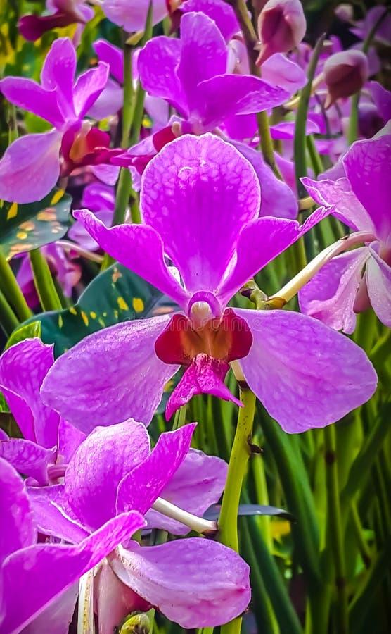 Orchidaceae stockfotos