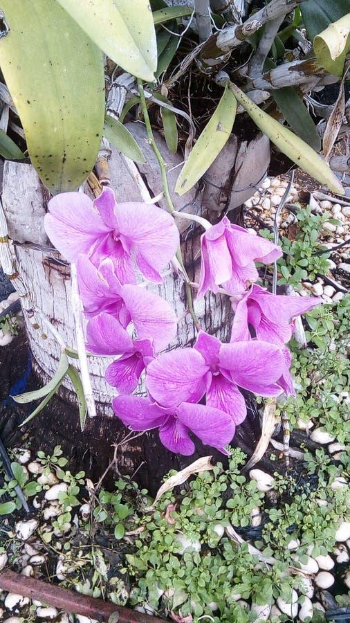 Orchidaceae fotografering för bildbyråer