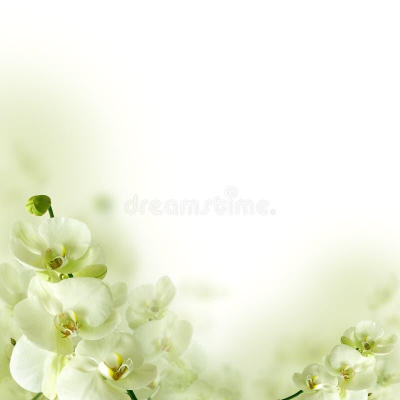 Orchidblommor och grönska, blom- bakgrund arkivfoton