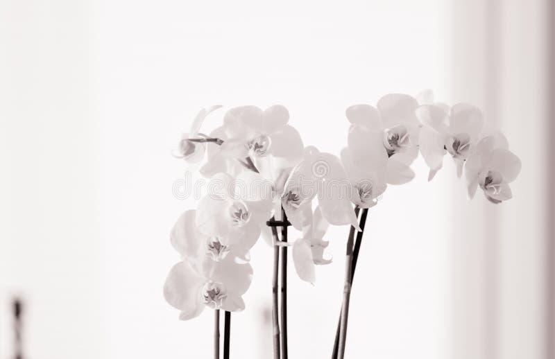 Orchide, hoher Schlüssel lizenzfreie stockfotografie
