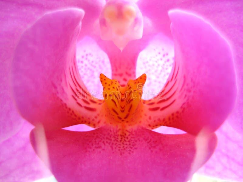 orchidea obrazy stock