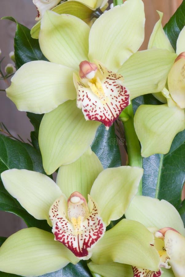 Download Orchidea zdjęcie stock. Obraz złożonej z jajnik, płatek - 13341742