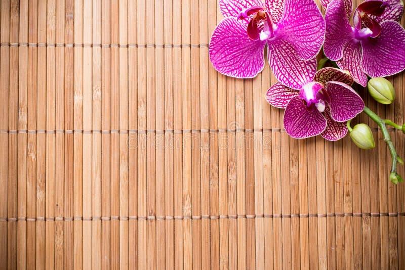 Download Orchidea obraz stock. Obraz złożonej z pojedynczy, pączek - 41951811