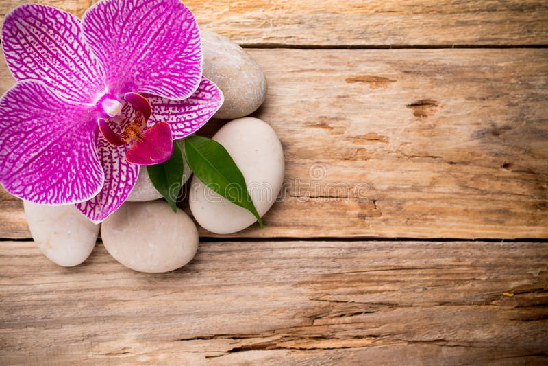 Download Orchidea obraz stock. Obraz złożonej z relaks, liść, życie - 41951971
