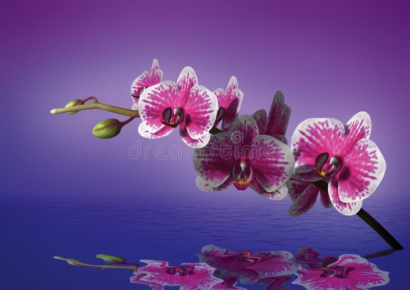 Orchidea ilustracja wektor