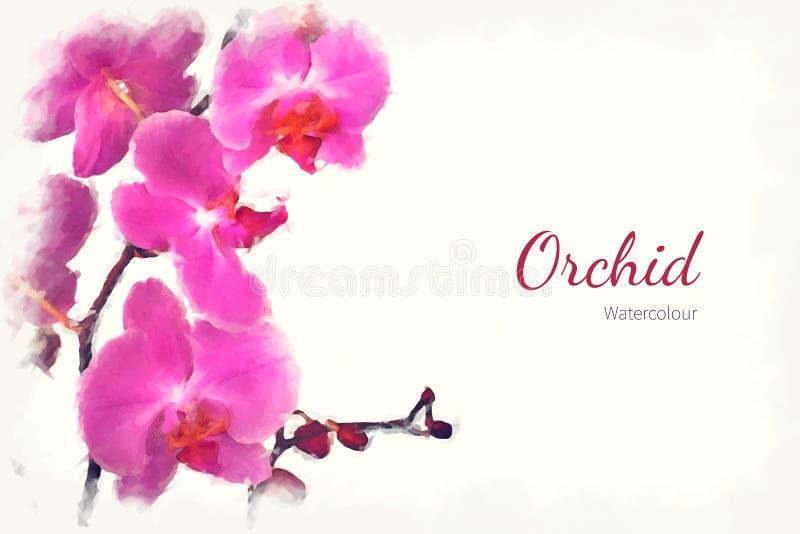 Orchidea acquerella illustrazione di stock