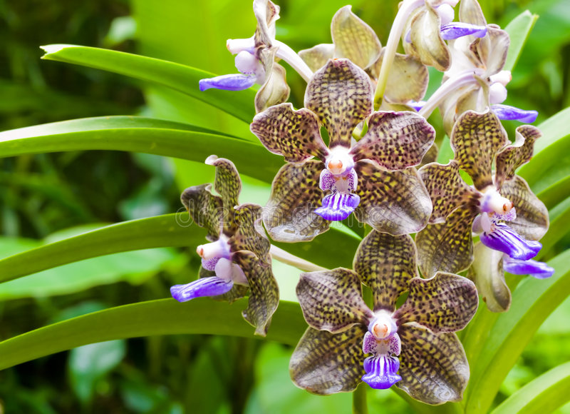 orchidea aromatyczne obrazy stock