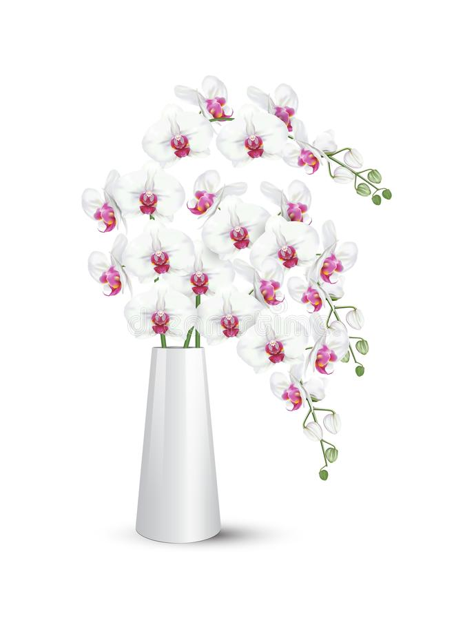 Orchidea bianca di phalaenopsis in vaso bianco royalty illustrazione gratis
