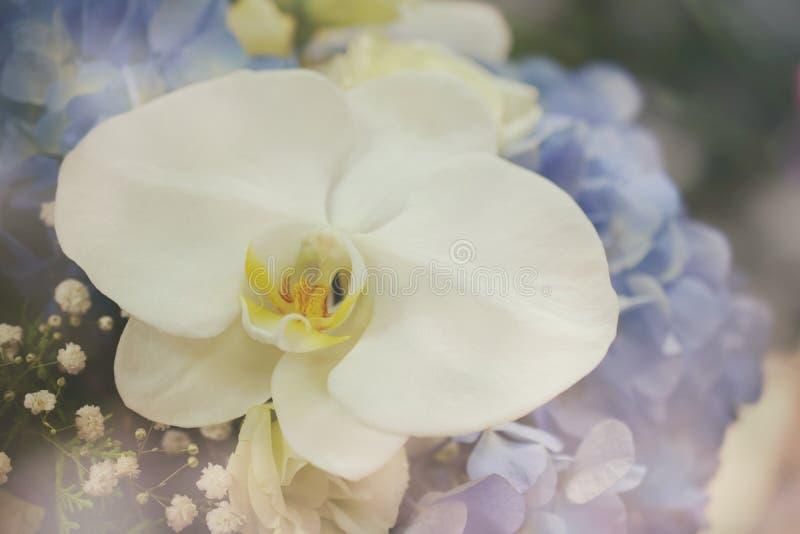 Orchidea bianca e fine blu del mazzo del fiore dell'ortensia su fotografie stock libere da diritti