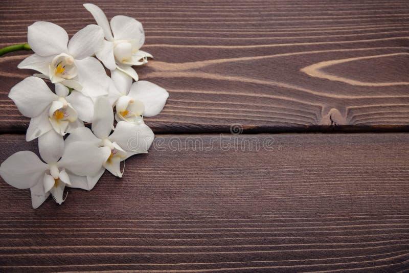 Orchidea bianca su fondo di legno immagini stock libere da diritti