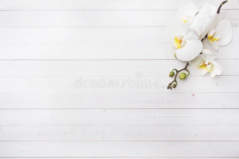Orchidea bianca sulla tavola bianca con lo spazio della copia Disposizione piana, vista superiore fotografie stock