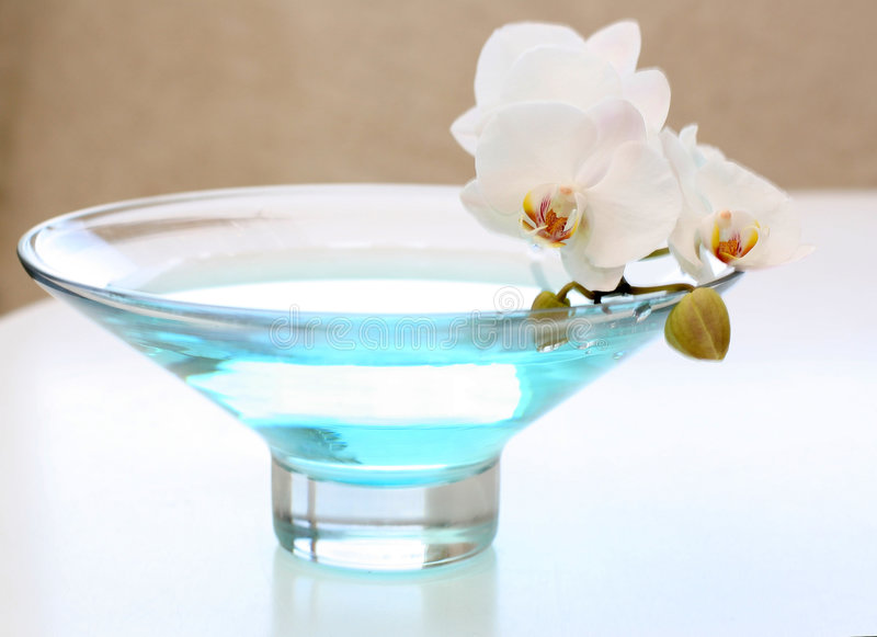 Orchidea bianca in vaso fotografia stock immagine di for Orchidea acqua